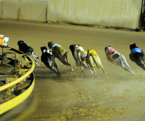 Cindeen Shelby Named AGRA October Greyhound Of The Month