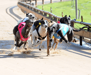 Late Night Racing Lights Up Lismore Greyhounds