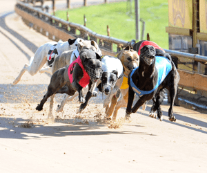 Batinich Trains A Double & McFarlane's A Treble At Canberra
