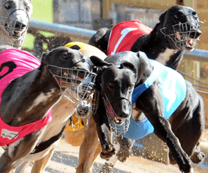 Fancy Mandy Blitzes 2010 Golden Easter Egg Heats In Style