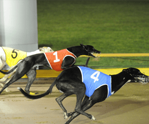 Five Greyhounds Advance Through First Round Melbourne Cup Preludes