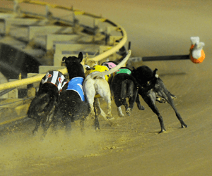 """Rose Hi"" Double For Thompson At Casino Greyhounds"
