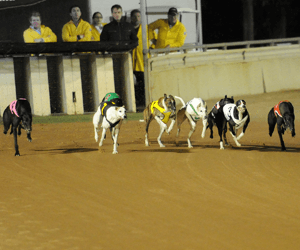 Bralyn Sal & Bralyn Riley Give Northfields A Casino Greyhounds Double