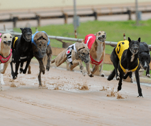 Doubles To Both McFarlane & Wadick At Canberra Greyhounds