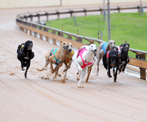 David Pringle Fined $1,000 For Prednisolone Positive In One Of His Star Greyhounds