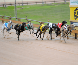 96 Greyhounds Progress In 2012 Ladbrokes Irish Greyhound Derby Round 2