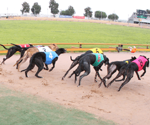 2008 Australian Greyhound Of The Year Finalists Announced
