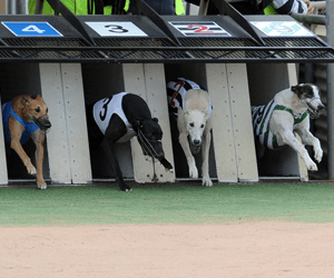 2010 Group Greyhound Racing Calendar