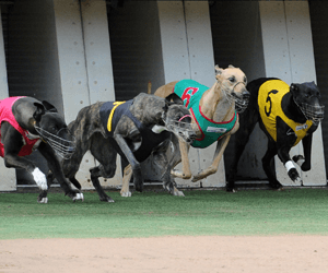 Heston Bale Awarded Australia's Best Greyhound Race In August 2012