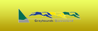 Greyhounds Queensland
