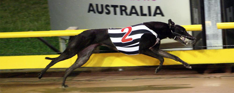 Amity Bale Is November's Greyhound Of The Month
