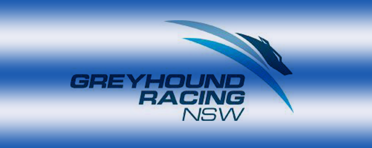 Greyhounds Need To Stop Subsidising Thoroughbred Racing