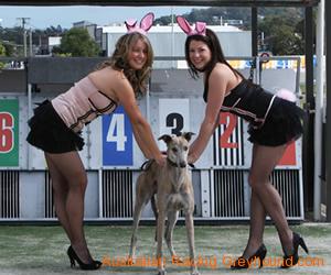 [Resim: big-dog-bunnies2.png]