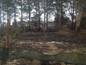 robertson fire 2