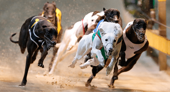 Greyhound racing betting systems that wintry tab online betting qld news