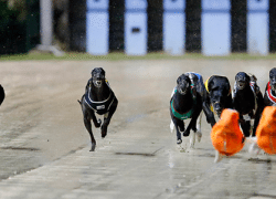dogsracing