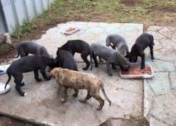Harbourne Pups
