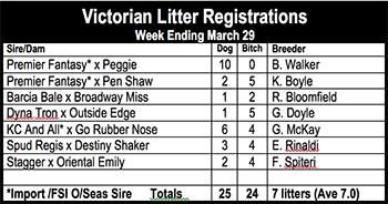 Victorian litter registrations