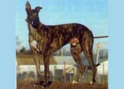 Greyhound_EJs_Douglas - Copy