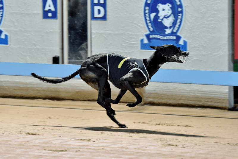 Barking Bad winning Gosford Cup