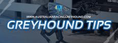 Greyhound Tips