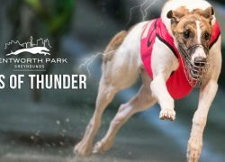 Paws of Thunder greyhound betting